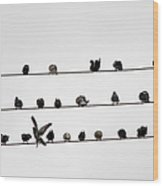 Birds Pattern Wood Print