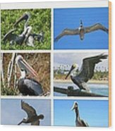 Birds - Pelicans - Boxed Cards Wood Print