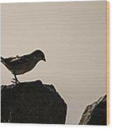 Birdy Wood Print