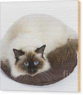 Birman Cat Wood Print
