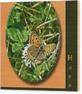 Birthday Greeting Card - American Copper Butterfly Wood Print