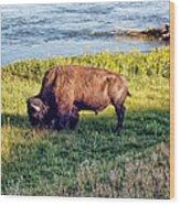 Bison 4 Wood Print