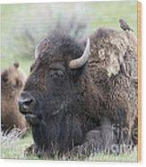 Bison And Birds Wood Print