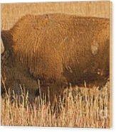 Bison At The Elk Ranch In Grand Teton National Park Wood Print
