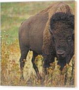 Bison Buffalo Wood Print