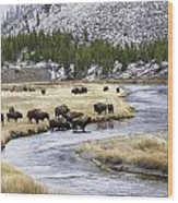 Bison By The Madison Wood Print