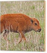 Bison Calf Grand Teton National Park Wood Print