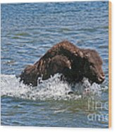 Bison Calf Running After Mama In Yellowstone National Park Wood Print