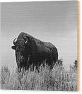Bison Cow On An Overlook In Yellowstone National Park Black And White Wood Print
