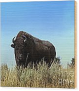 Bison Cow On An Overlook In Yellowstone National Park Wood Print