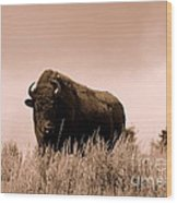 Bison Cow On An Overlook In Yellowstone National Park Sepia Wood Print