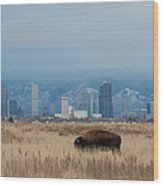 Bison Graze With Denver Colorado In The Background Wood Print