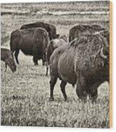 Bison Herd Bw Wood Print