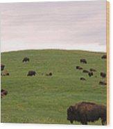 Bison Herd Wood Print by Olivier Le Queinec