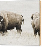 Bison II Wood Print