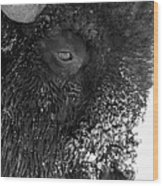 Bison In Black And White Wood Print