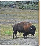Bison In Lamar Valley Wood Print by Marty Koch