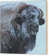 Bison In Snow Wood Print