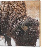 Bison In Snow_1 Wood Print