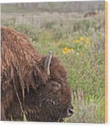 Bison In The Flowers Ingrand Teton National Park Wood Print