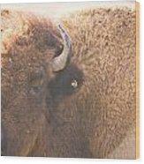 Bison Lick Wood Print