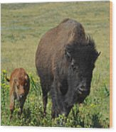 Bison Mother And Calf Wood Print