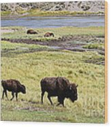 Bison Mother And Calf In Yellowstone National Park Wood Print