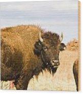 Bison On Tall Grass Iv Wood Print