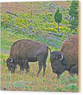Bison Pair In Hayden Valley In Yellowstone National Park-wyoming  Wood Print