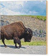 Bison Plodding Along On Alaska Highway-bc-canada Wood Print
