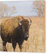 Bison Tall Grass Wood Print