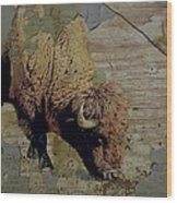 Bison Vintage Style -photo- Art Wood Print by Ann Powell