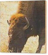 Bison Wander Wood Print