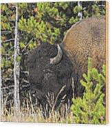 Bison's Portrait Wood Print