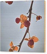 Bittersweet Vine Wood Print