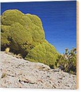 Bizarre Green Plant Bolivia Wood Print