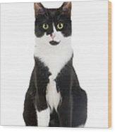 Black & White Cat Wood Print