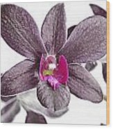 Black And Purple Orchid Wood Print