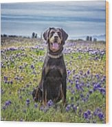 Black And Tan Coonhound In Field Of Wood Print