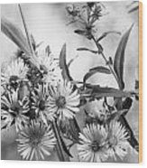 Black And White Asters Wood Print