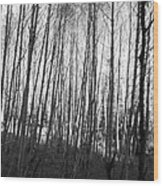 Black And White Birch Stand Wood Print