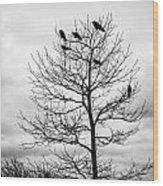 Black And White Blackbirds  Wood Print