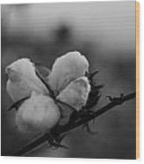 Black And White Boll Wood Print