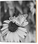 Black And White Butterfly Wood Print by Debbie Sikes