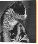 Black And White Cat In Profile  Wood Print
