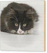 Black-and-white Cat Wood Print