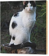 Black And White Cat On Tree Stump Wood Print