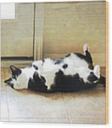 Black And White Cat Reclining Wood Print