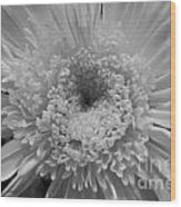 Black And White Chrysanthymum Wood Print
