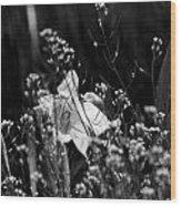 Black And White Daffodil Wood Print